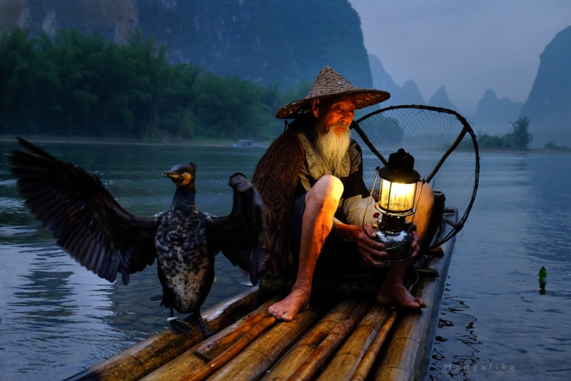 Other than the iconic hills Yangshuo has been also a home to many Chinese Cormorant fishermen. It is an ancient and unusual tradition where people go fishing with trained cormorants.